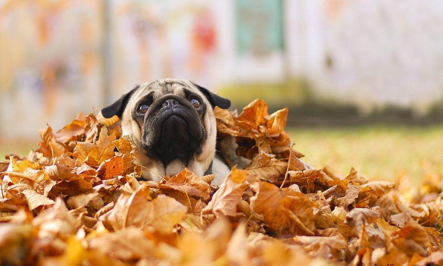 enjoy thanksgiving images