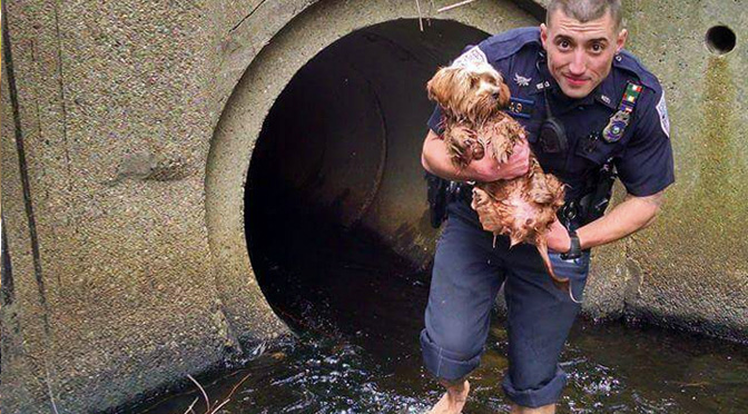 heroic-dog-rescues-by-police-officers