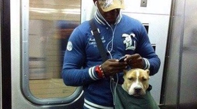 NYC Subway Bans Dogs Unless They Fit Into A Bag These Big Dog - Nyc subway bans dogs unless fit bag new yorkers reacted