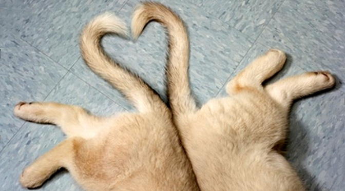 perfect dog tails