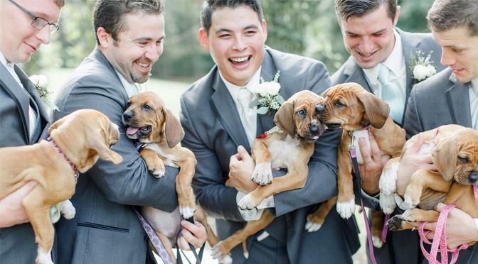 puppy-bouquet-wedding