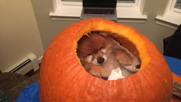 10 Puppies that Fit Inside a Pumpkin. Need We Say More?