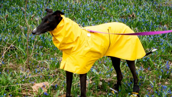 The Best Dog Rain Gear, from Jackets and Boots to Towels and Totes
