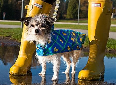 Packable Rain Poncho via RC Pets