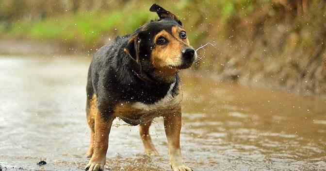 raindog4