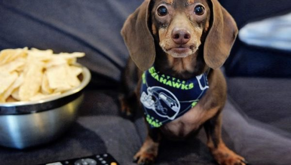 8 Dogs Who'd Make Anyone Excited for Football Season