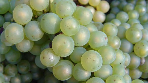 Why Dogs Should Never, Ever Eat Grapes