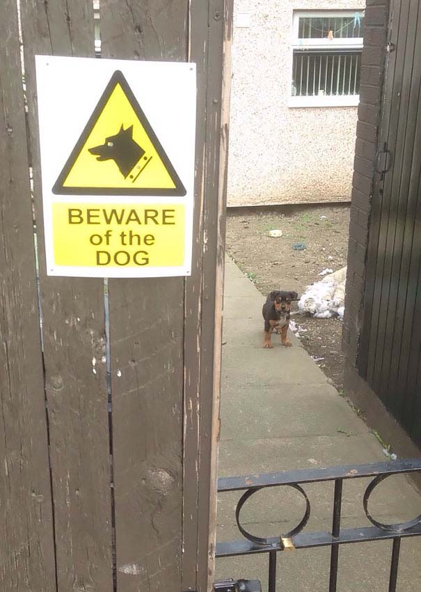 beware-of-dog-puppy