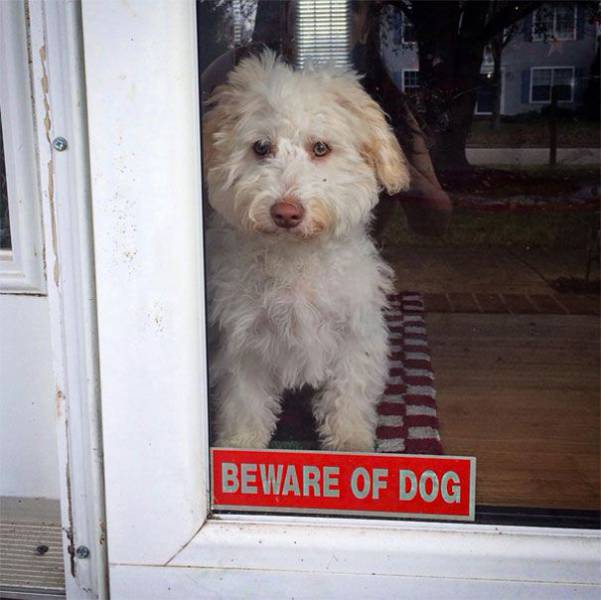 beware-of-dog-who-has-seen-it-all