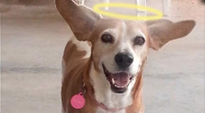 Bless you Daisy Beagle