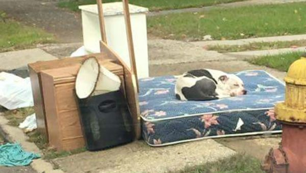 Dog Rescued after Family Moves Away and Leaves Him Behind with the Trash