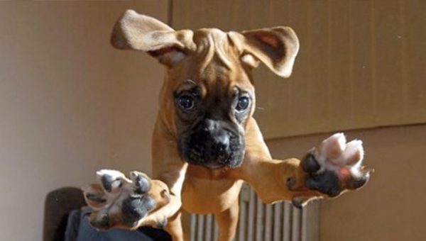 Warning: 9 Adorable Puppies about to Pounce