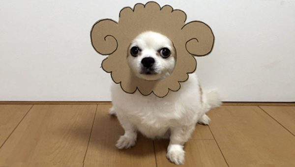 Chihuahua Loves Dressing Up in Incredible Cardboard Masks and Costumes