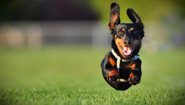 Surprisingly Effective Ways to Handle High-Energy Dogs