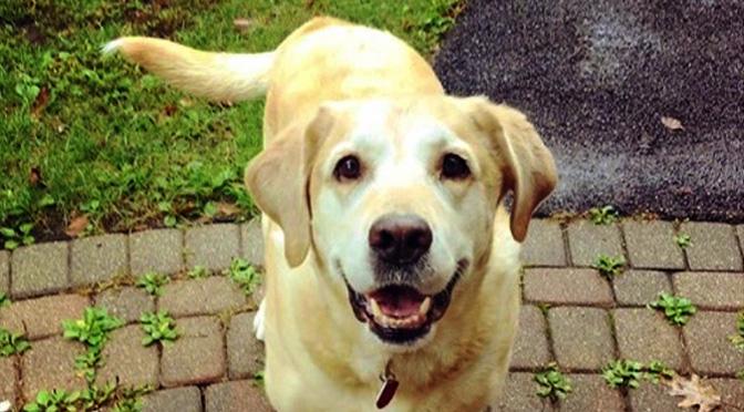9 Common Dog Facial Expressions Deciphered Rover Com