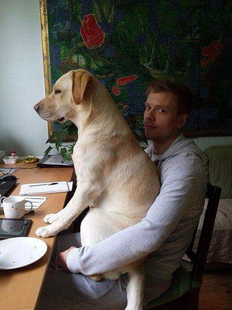 dog-on-lap-at-dinner-table