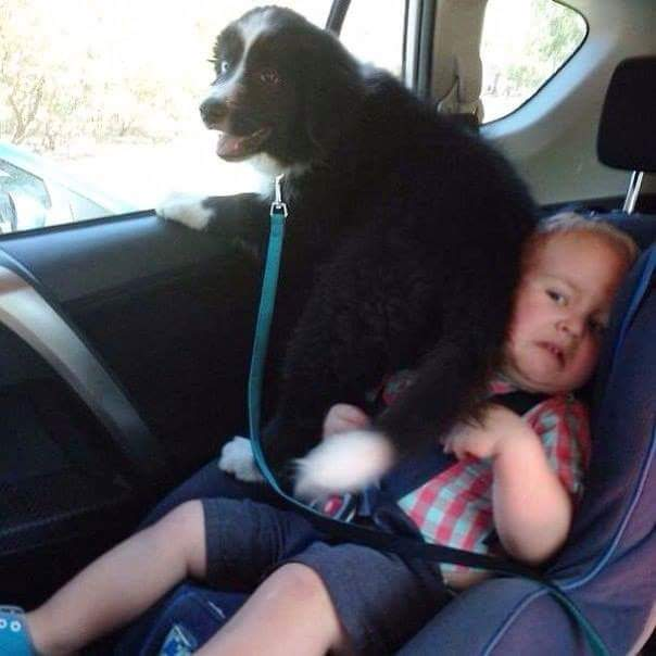 dog-on-toddler