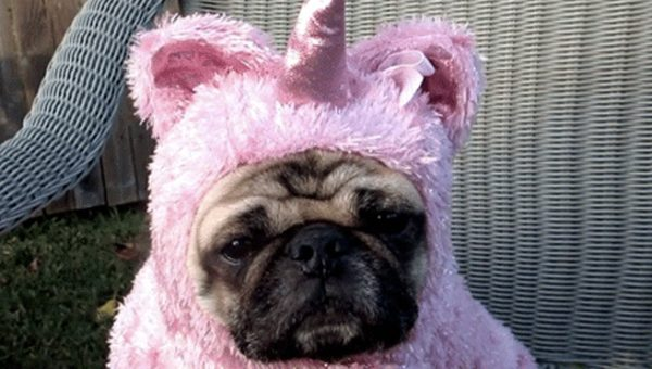 10 Dogs with Serious Halloween Costume Regrets