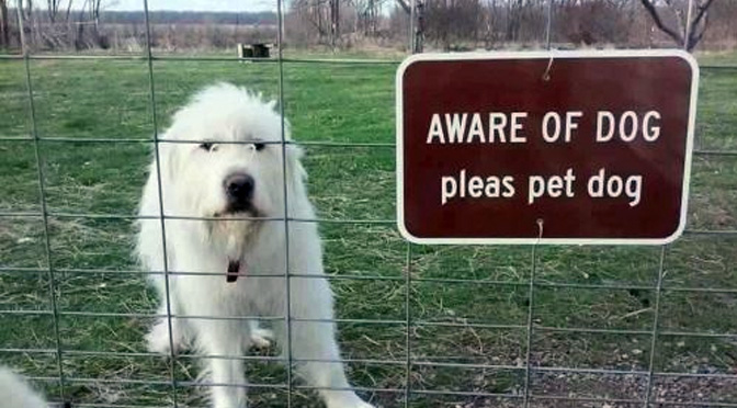 dogs-you-should-definitely-beware-of