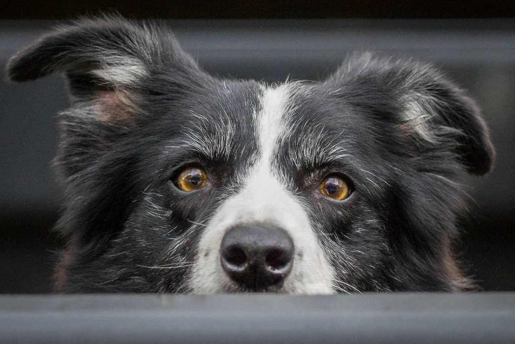 Why are My Dog\'s Eyes Red? | The Dog People by Rover.com