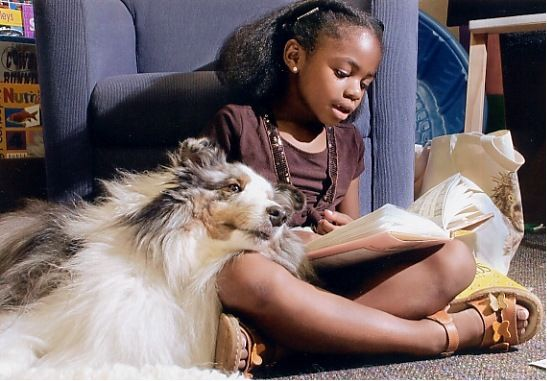 therapy dogs reading collie for book lovers