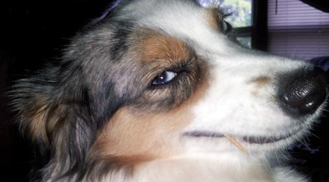 hey-girl-dog-pickup-lines