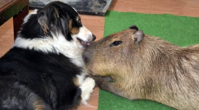 jojo-capybara-and-his-dog-friends.jpg