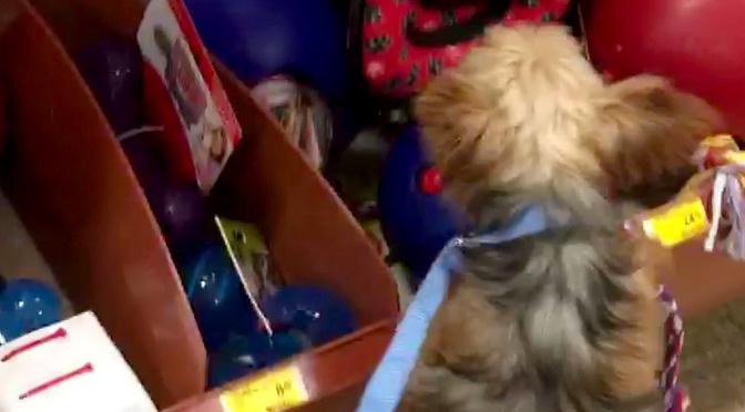 katarina-picks-own-dog-toy