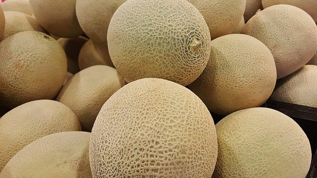Can My Dog Eat Cantaloupe Rind The Dog People By Rover Com Cantaloupe, cucumis melo, is a vining plant in the family cucurbitaceae, grown for its large, sweet cantaloupe vines are trailing and are slightly hairy with simple oval leaves arranged alternately on the. can my dog eat cantaloupe rind the