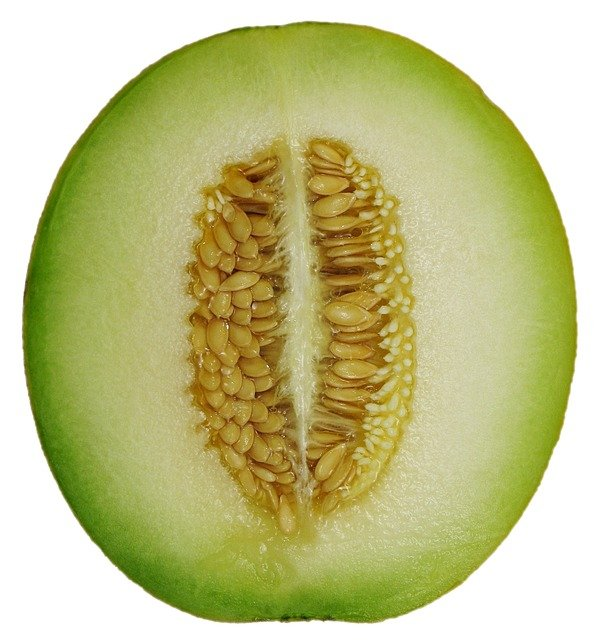honeydew melon
