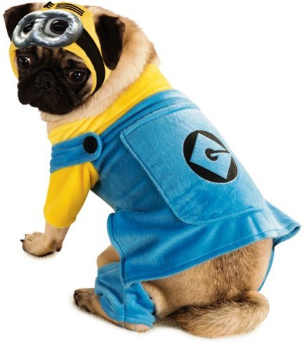 pug dressed as Minion