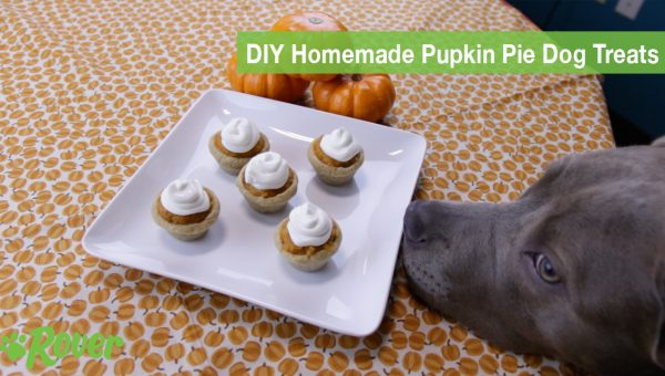 Video: Puppy Makes DIY Pumpkin Pies for Dogs, and It's Everything Good in the World