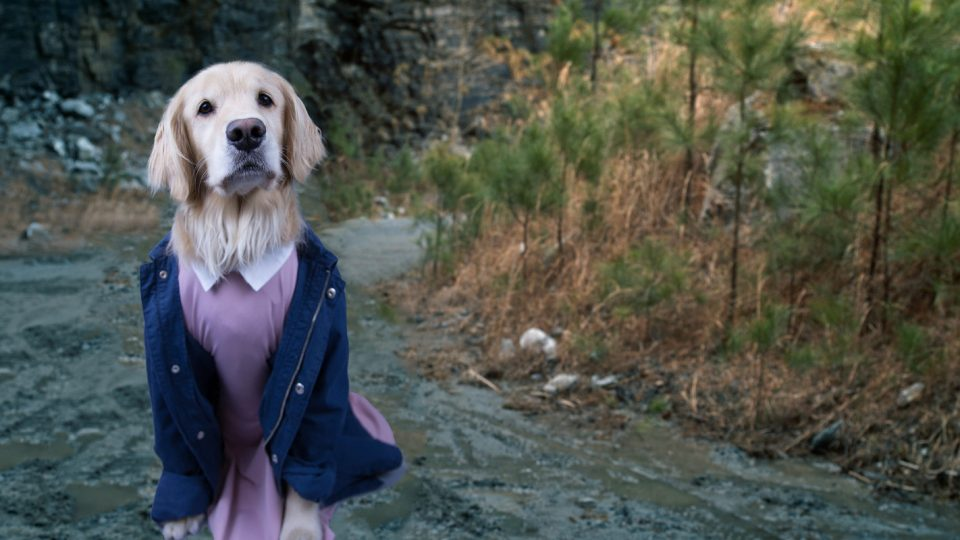 dog stranger things eleven halloween costume