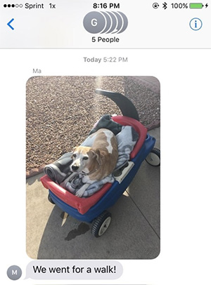 wagon-rides-for-daisy-beagle