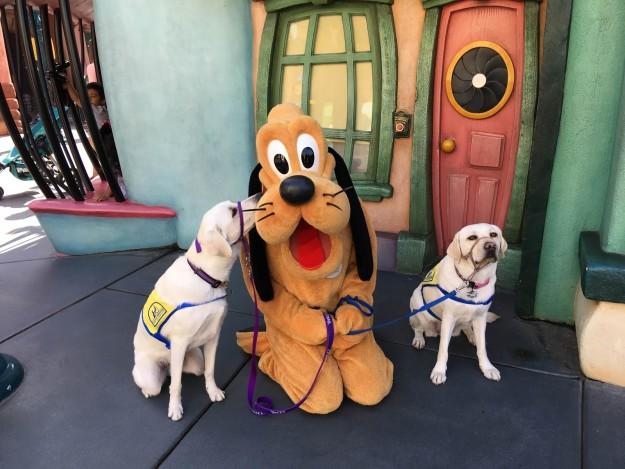 service dog disneyland yahoo