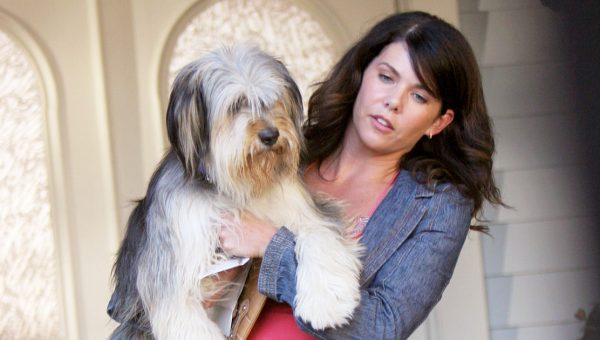 Meet Paul Anka the Dog, Back for the Gilmore Girls Revival