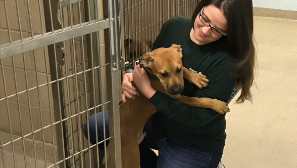 How Animal Rescue Volunteers Create Happily Ever Afters