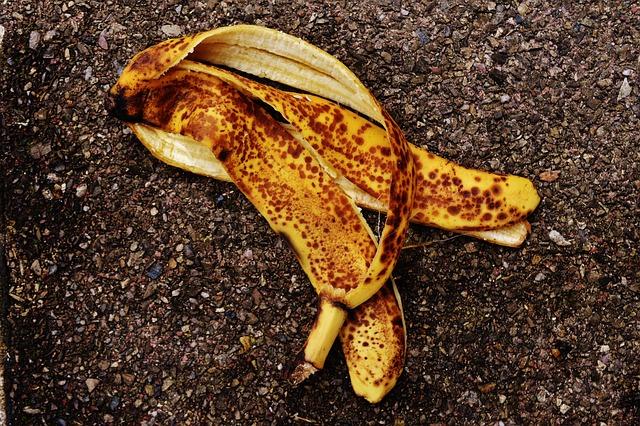 Can My Dog Eat Banana Peels? | The Dog