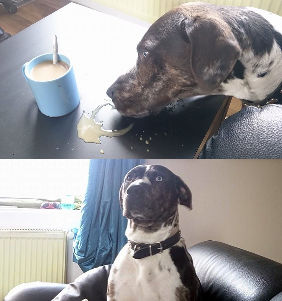 before-coffee-after-coffee-dog
