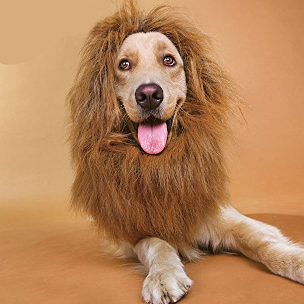blackfriday-lion-wig