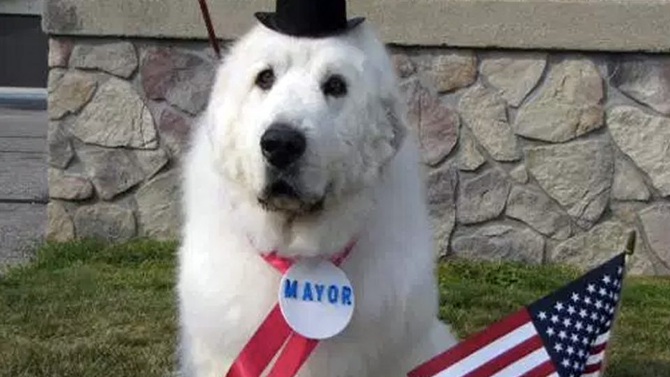 dog-mayors-duke-cormorant-minnesota