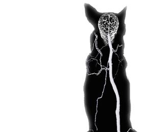 dog-seizure-1