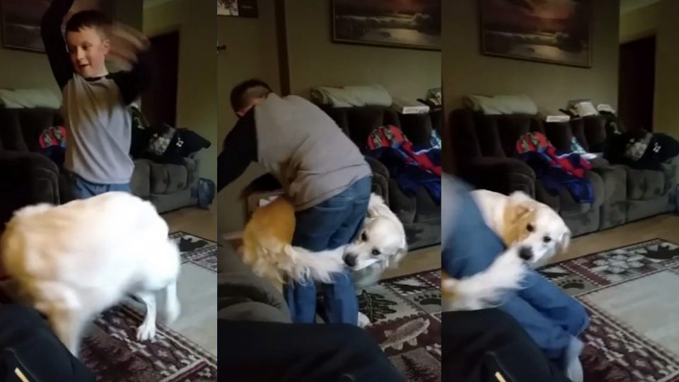 dog-takes-tail-chasing-to-the-next-level