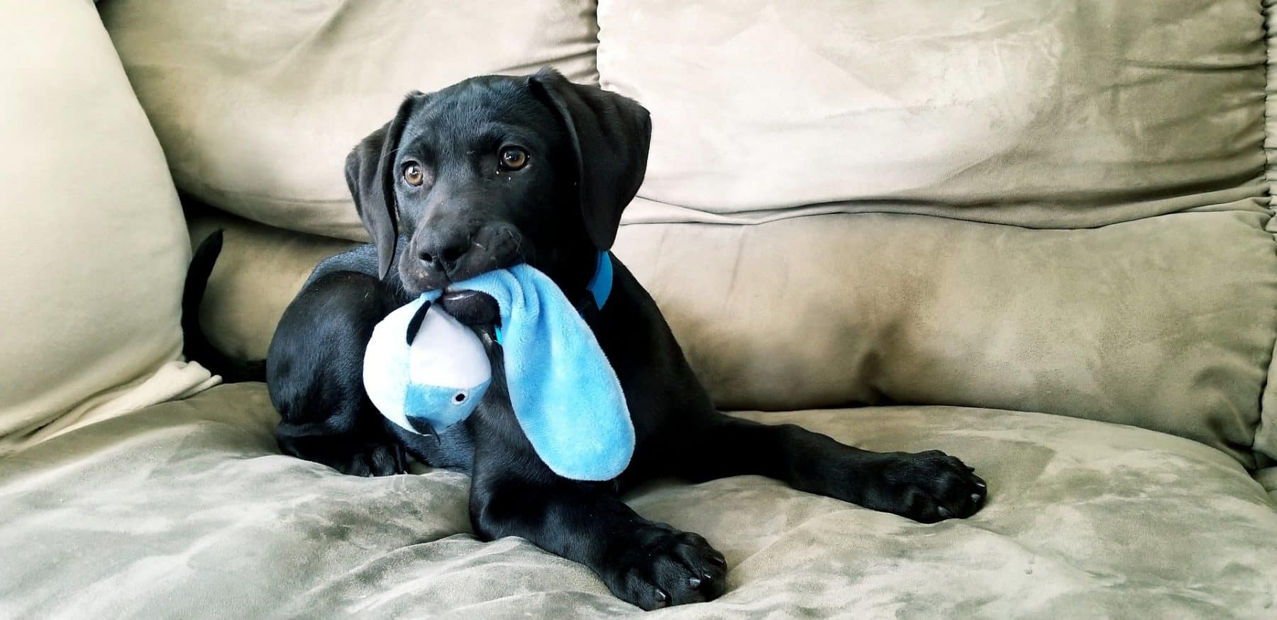 3e6f85c172c577 20 Chew Toys for Puppies That'll Save Your Shoes | The Dog People by  Rover.com