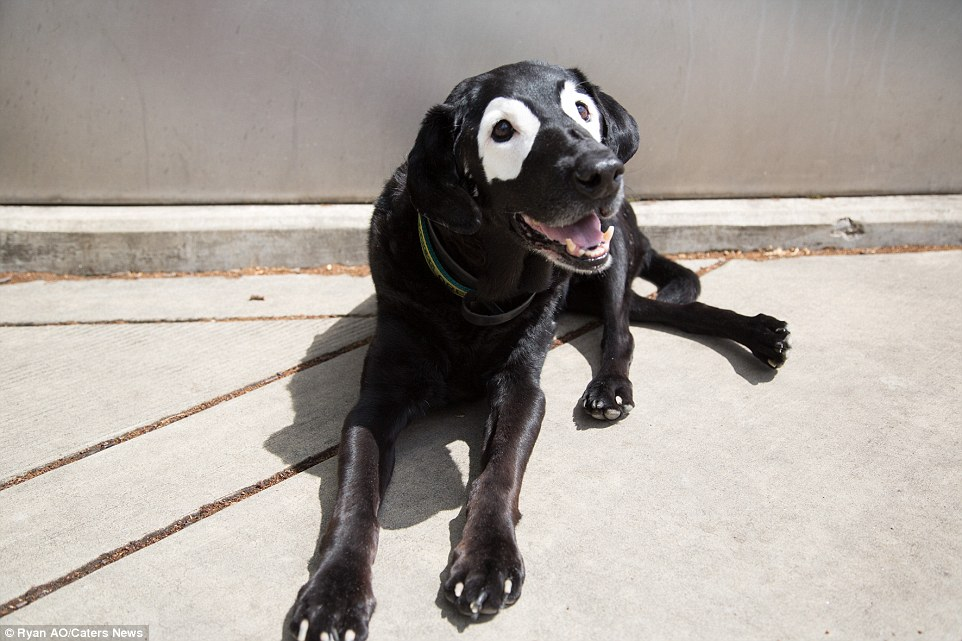 When Black Dogs Turn White All About