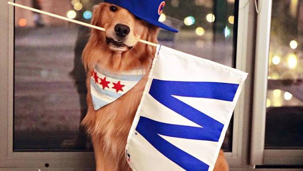 10 Chicago Dogs Who Stayed Up to Watch the World Series