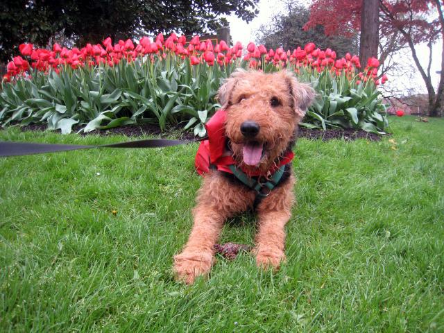 portland dog