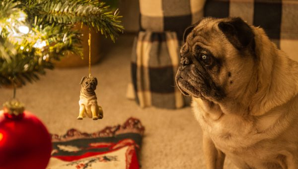 23 Best Gifts for Pug Lovers