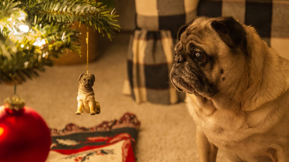 23 Best Pug Gifts for Pug Lovers