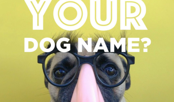 Dog Name Generator: What Would Your Dog Name Be?